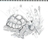 Art Science ... Arizona Endangered Species Coloring Pages (8 printables)