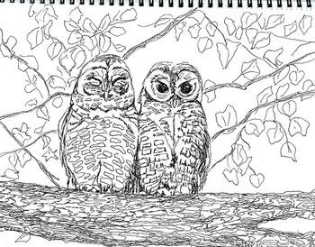 Art Science ... Arizona Endangered Species Coloring Pages (8 printables)