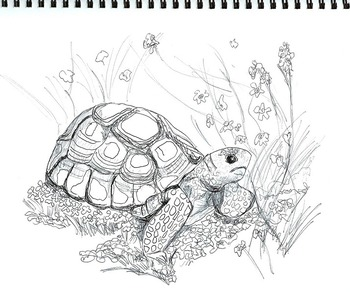 Arizona Endangered Species Coloring Pages (8 printables),Art Science