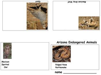 Art Science ... Arizona Endangered Species Mini Books (5 printables)