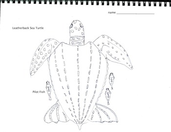 Coloring Leatherback Sea Turtle (2 pages), Art, Math