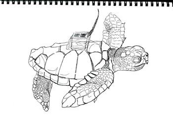 Bundled Sea Turtles (7 printable pages), Art Science