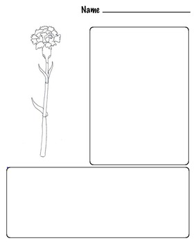 Art Science ... Drawing & Coloring Flowers - Carnations & More (12 pages)