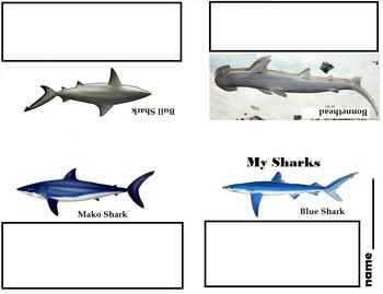 Art Science ... Drawing Sharks Mini Books (2 printables)
