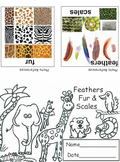 Animals: Feathers, Fur & Scales Mini Book (4 Printables) Science