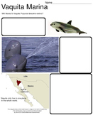 Art Science ... Save the Vaquita Marina Endangered Porpoise (2 printables)