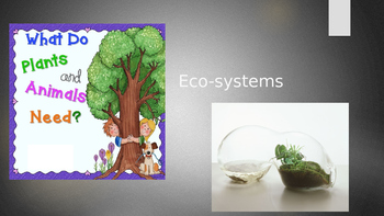 Art project: Terrariums and the ecosystem
