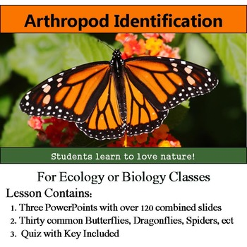 Insect Identification - 30 Arthropods: Bugs, Butterflies, Spiders, ect w/ Quiz