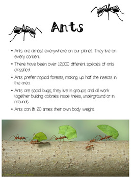 Arthropod Insect Unit Study 3rd- 4th