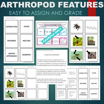 Arthropod Traits (Exoskeleton, Chitin, Molting, etc) Sort & Match Activity