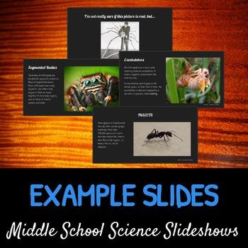 Arthropods: A Life Sciences Slideshow!