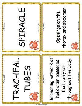 Arthropods Vocabulary Cards