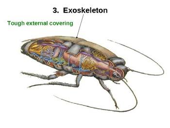 Arthropods: Classification, Structure, and Function