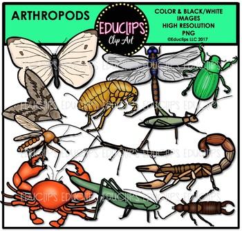 Arthropods Clip Art Bundle {Educlips Clipart}