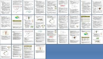 Arthropods Crustaceans Insects Arachnids Unit Bundle - 10 Files