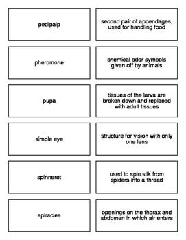 Arthropods Flash Cards for Biology II