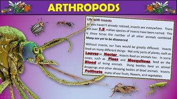 Arthropods PowerPoint