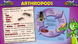 Arthropods PowerPoint