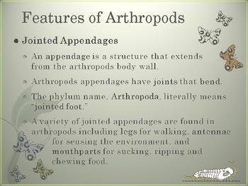 Arthropods PowerPoint Presentation Lesson Plan