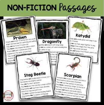 Arthropods Research and Animal Reports - Scorpions Dragonfly Prawns Beetles