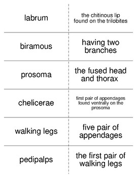 Arthropods Vocabulary Flash Cards for Invertebrate Biology