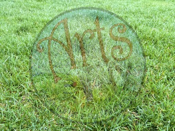Stock Photo - Photograph - Grass