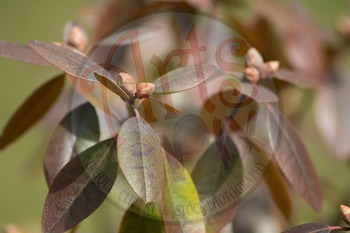 """Stock Photos - """"Early Spring Flowers"""" - Photo Pack BUNDLE - Arts & Pix"""