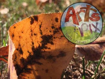 """Stock Photos - """"Fall Outdoors"""" - Autumn photo pack BUNDLE - Arts & Pix"""