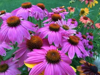 "Stock Photos - ""Summer Flowers"" - photographs - BUNDLE - Arts & Pix"