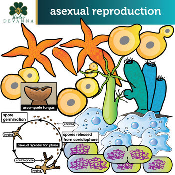 Asexual Reproduction Clip Art Set