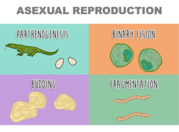 Parthenogenesis and asexual reproduction pictures
