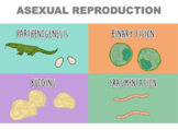 Asexual Reproduction (Editable)