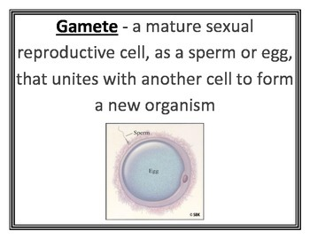 Asexual & Sexual Reproduction Word Wall Vocabulary