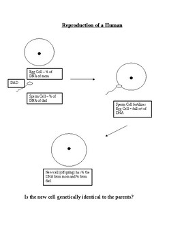 Asexual vs. Sexual Reproduction Diagram Analysis
