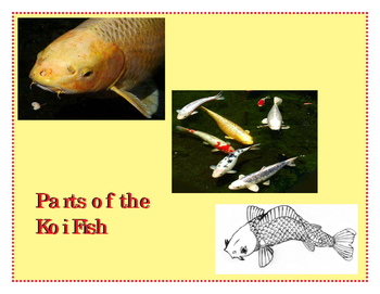 Asia: Parts of the Koi Fish Three Part Cards