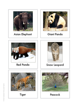 Continent Animal Cards, Asia