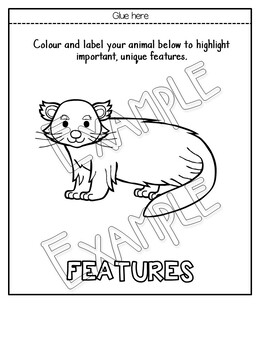 Asian Animal Flipbooks and Information Sheets