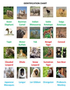 Asian Animals Board Game