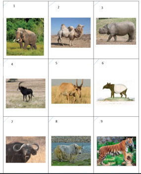 Asian Animals Checkers