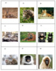 Asian Animals Concentration
