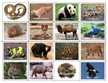 Asian Animals:  Mini Matching Cards