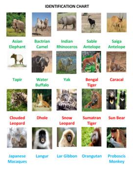 Asian Animals Photo Safari Game