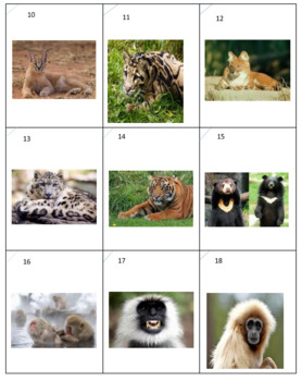 Asian Animals Sort Game