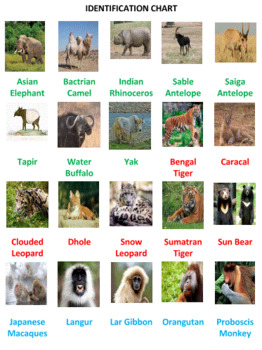 Asian Animals Word Search Puzzles