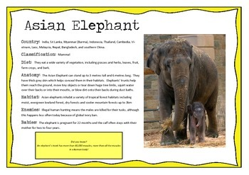 Asian Animals information posters
