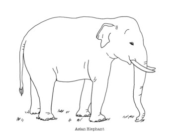 Asian Elephant Coloring Page By Mama Draw It Teachers Pay Teachers