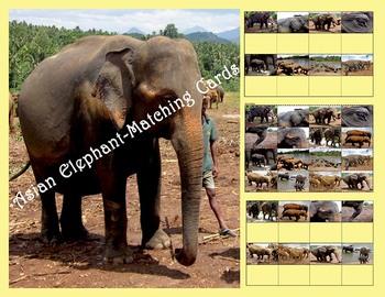 Asian Elephant  Mini Matching Cards