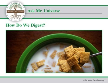 Ask Dr Universe: How do we digest?