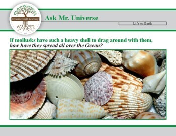 Ask Dr Universe: If Mollusks have such a heavy shell how do they get all over?