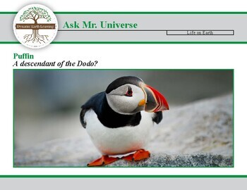 Ask Mr Universe: Is the puffin a descendant of the dodo?